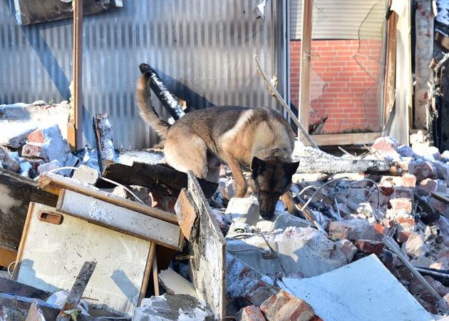 Brandmittelspürhund der Polizei im Einsatz