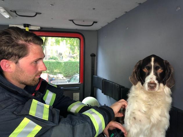 Geretter Hund wurde durch die Feuerwehr betreut