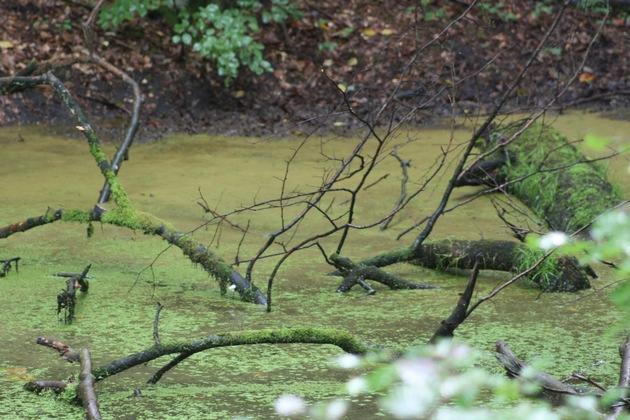 Zu hohe Nährstoffeinträge führen zu Algenwachstum und gefährden die Biologische Vielfalt unter Wasser. Foto: GNF Archiv