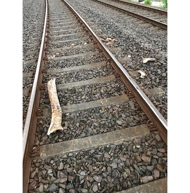 BPOL NRW: 36-Jähriger legt Baumstämme und Fahrrad auf die Schienen - Bundespolizei ermittelt wegen gefährlichen Eingriffs in den Bahnverkehr
