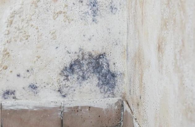 Zwischen Panikmache und Gefahr: Schimmel im Wohnraum / Gesundheitsrisiken und die Beseitigung auf einen Blick