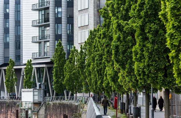 Große Bäume braucht die Stadt! Nachpflanzungen im urbanen Raum