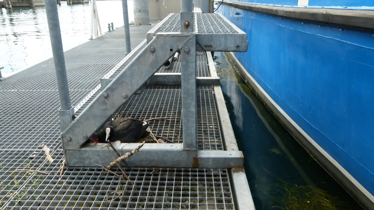 POL-KN: Nachwuchs bei der Wasserschutzpolizei in Friedrichshafen