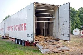 Elefanten im Transportwagen. Die Tiere sind dort oft über mehrere Stunden eingesperrt, können sich nicht bewegen © VIER PFOTEN, Fred Dott