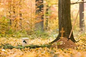 Ein beispielhaftes Baumgrab im FriedWald vor einer Beisetzung.