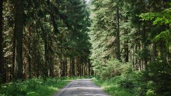 Gute befestigte Wege führen durch den FriedWald Schenkenzell.