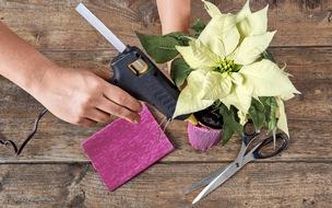 Schritt 3: Topfmanschette (im Blumenladen erhältlich) auf passende Höhe zurechtschneiden und um den Topf platzieren.