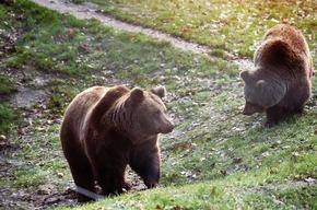 Viel Platz, Natur und frisches Futter: Bären im BÄRENWALD Müritz © VIER PFOTEN, Christopher Koch