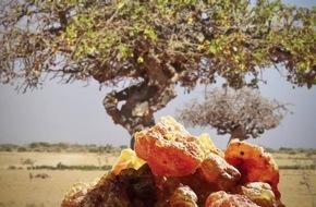 Mystische Myrrhe in der Weihnachtszeit: so wertvoll wie Gold - Geschenk der Heiligen Drei Könige & Moderne Darmarznei