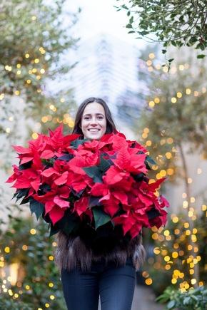 farbenfroher sternenzauber f r dunkle tage die weihnachtssternsaison beginnt presseportal. Black Bedroom Furniture Sets. Home Design Ideas