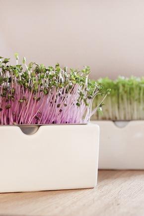 Frische Ernte ohne Garten und Balkon