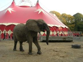 Trostloses Gehege: Elefant im Zirkus Voyage (c) VIER PFOTEN