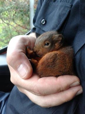 Einchhörnchenrettung