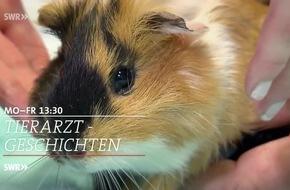 """""""Tierarztgeschichten"""" begleitet zwölf Tierärzte aus dem Südwesten"""