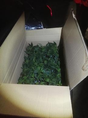 Foto Bundespolizei - sichergestellte Betäubungsmittel (80 Cannabispflanzen)