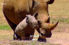 """""""Elstners Reisen: Die Retter der Nashörner"""" in Ostafrika"""
