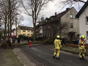 Baum auf PKW gestürzt