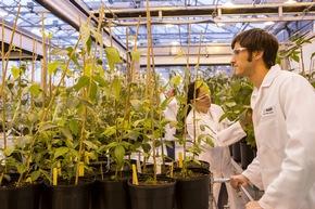 """Die wissenschaftlichen Mitarbeiter Matthew Weppler (rechts) und Daniela Loaiza (links) scannen Barcodes transgener Sojabohnenpflanzen. Die transgenen Sojabohnen sind Teil eines Projekts, das zum Ziel hat, Sojabohnen gegen Schadpilze, wie den Asiatischen Sojabohnenrost, resistent zu machen. Dieser Pilz führt jedes Jahr zu hohen wirtschaftlichen Verlusten in der Landwirtschaft. Abdruck honorarfrei. Copyright by BASF. +++ Matthew Weppler (right) and Daniela Loaiza (left), both Assistant Scientists in plant management, scan barcodes of transgenic soybean plants. The transgenic soybeans are part of a project that works on making soybeans resistant against fungal pathogens like Asian soybean rust, which contributes to high economic losses in agriculture every year. Print free of charge. Copyright by BASF. Weiterer Text über ots und www.presseportal.de/nr/16344 / Die Verwendung dieses Bildes ist für redaktionelle Zwecke honorarfrei. Veröffentlichung bitte unter Quellenangabe: """"obs/BASF SE/Detlef W. Schmalow"""""""