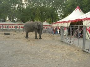 Trostlose Gehege: Elefanten im Zirkus Voyage © VIER PFOTEN