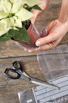 Schritt 2:Topf-Weihnachtsstern mit Moos umwickeln. Gefrierbeutel zurechtschneiden, Weihnachtsstern samt Pflanzentopf in den Gefrierbeutel setzen.