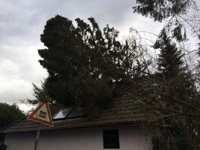 Baum auf Hausdach