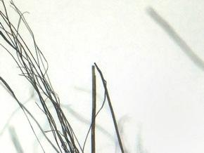 Sind die Haarspitzen geschnitten kann man von Kunstpelz ausgehen © VIER PFOTEN