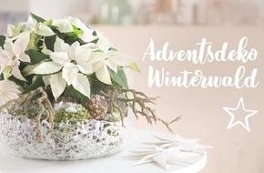 Kreative Dekorationsideen mit Weihnachtssternen: neue DIY-Videos
