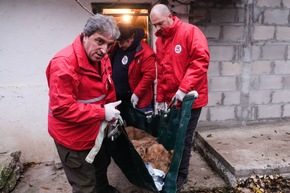 VIER PFOTEN sorgt für medizinische Versorgung und Umsiedlung (c) VIER PFOTEN, Bogdan Baraghin