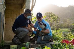 Puerto Rico: Tierarzt Dr. Zee von VIER PFOTEN untersucht einen zurückgelassenen Hund  © Roxanne Bolton | VIER PFOTEN