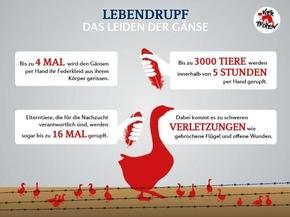 Infografik Lebendrupf © VIER PFOTEN
