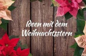 Schöne Deko-Ideen für die Adventszeit: Entdecken Sie unser Upcycling-DIY-Video mit Weihnachtssternen!