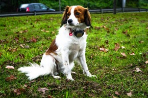 V-Pet ist ein GPS-Tracker für Katzen und Hunde vom Hersteller Kippy.