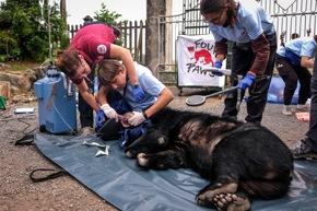 Nach der Befreiung werden die Bären gründlich medizinisch untersucht © VIER PFOTEN, Bogdan Baraghin