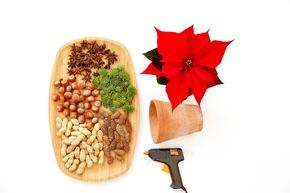 BILD 2: Benötigt werden ein Weihnachtsstern, ein Übertopf in Tonoptik, Haselnüsse, Erdnüsse, Sternanis-Früchte, Zapfen, Hauswurz-Rosetten und eine Heißklebepistole mit passenden Sticks.