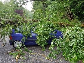 Baum auf Fahrzeug