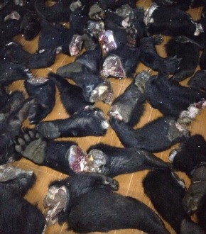 Bärentatzen: eine grausame Delikatesse in Vietnam © VIER PFOTEN