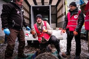 Endlich frei von der Kette: Bärenexperte Carsten Hertwig (Mitte) nimmt Mashutka das enge Halsband ab © VIER PFOTEN | Bogdan Baraghin