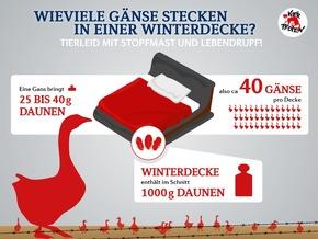 Infografik Daunenproduktion © VIER PFOTEN