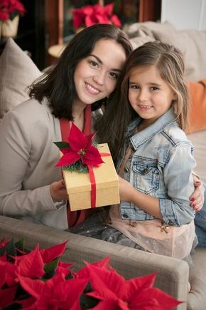 Die meisten kennen den Weihnachtsstern vor allem als Topfpflanzen. Doch lassen sie sich auch wunderbar als Schnittblumen verwenden, zum Beispiel zum Verzieren von Geschenken.