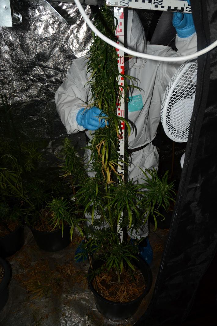 Ein Kriminaltechniker vermisst und sichert die Pflanzen.