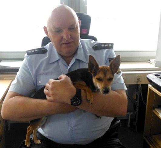 Bundespolizisten kümmern sich um herrenlosen Hund Foto Bundespolizei