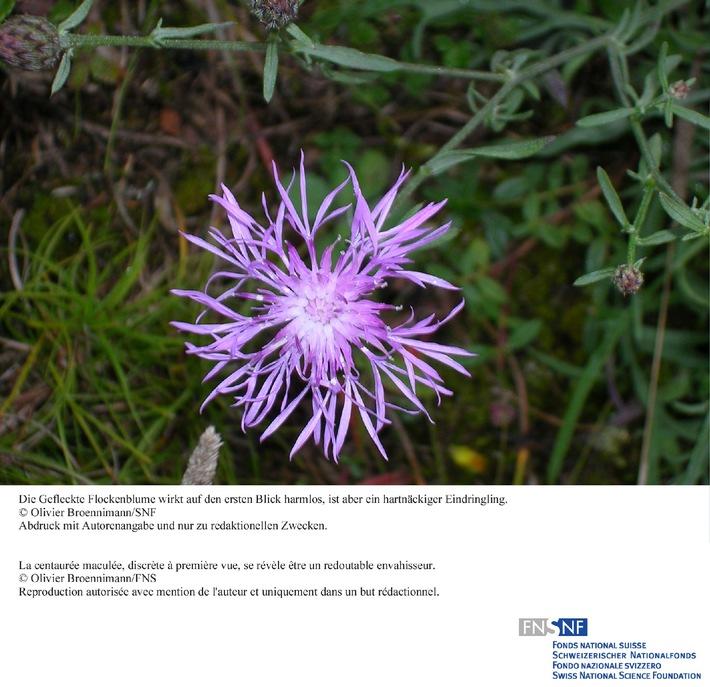 FNS: Image du mois novembre 2008: Plantes envahissantes