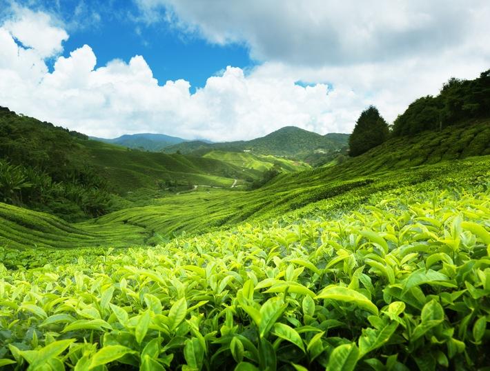 Ceylon-Tee - 150 Jahre Spitzenklasse