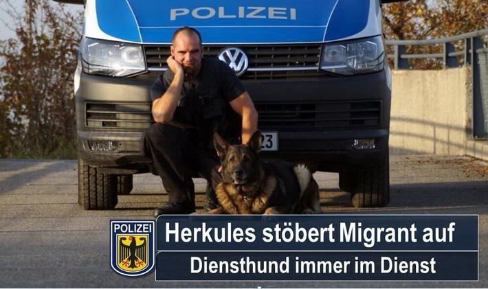 Herkules stellte einen illegal aufhältigen Somalier und brachte damit seinen Diensthundeführer Mario Bornkessel um seinen wohlverdienten Feierabend