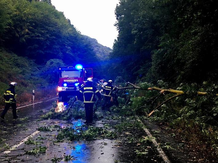 Ein umgestürzter Baum auf der Wetterstraße