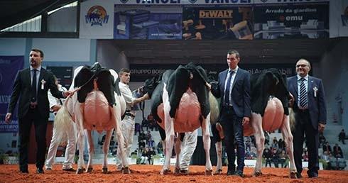 Hochleistungskühe bei der Viehzüchtermesse in Cremona/Italien. (c) EIKON FILMPRODUKTION und MIRAMONTE FILM, Martin Rattini