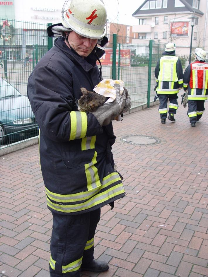 FW-E: PKW-Brand durch eine Katze
