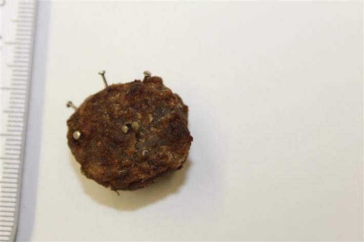 Eins der aufgefundenen, mit Nägeln gespickten Fleischbällchen