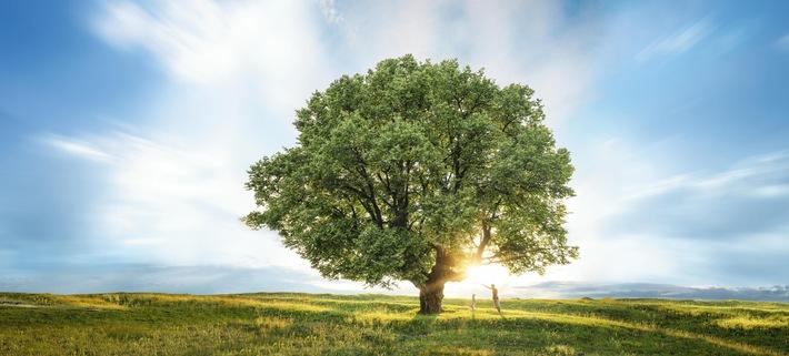 Alphabet bietet CO2-Kompensationsprogramm an / Alphabet kooperiert mit First Climate
