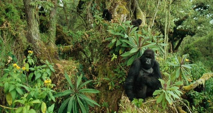 """Sonderprogrammierung """"Im Reich der Affen"""" ab 7. Juli auf Nat Geo Wild"""